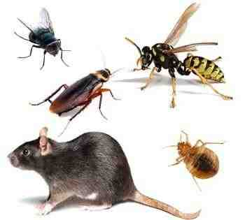 Plagas online - Productos Anti-plagas