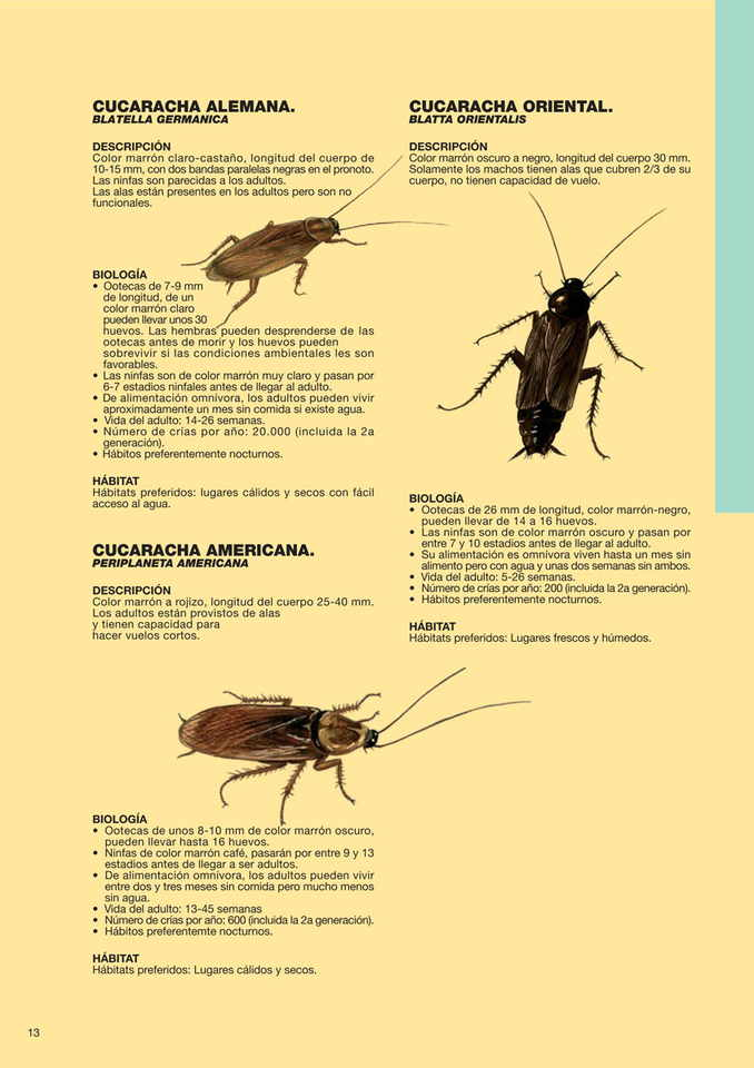 Cucarachas tienda plagas online - Como acabar con las hormigas en el jardin ...
